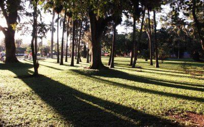 O que fazer no Parque da Cidade Sarah Kubitschek