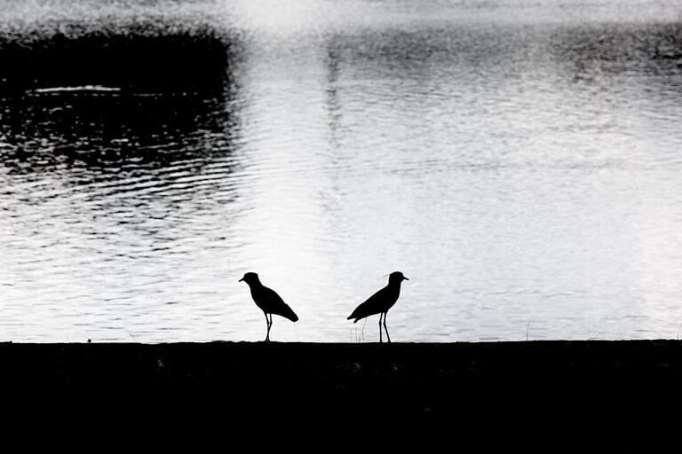 Passarinhos no Lago Paranoá