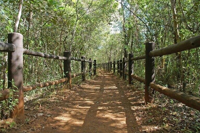 Trilhas no Parque Nacional de Brasília