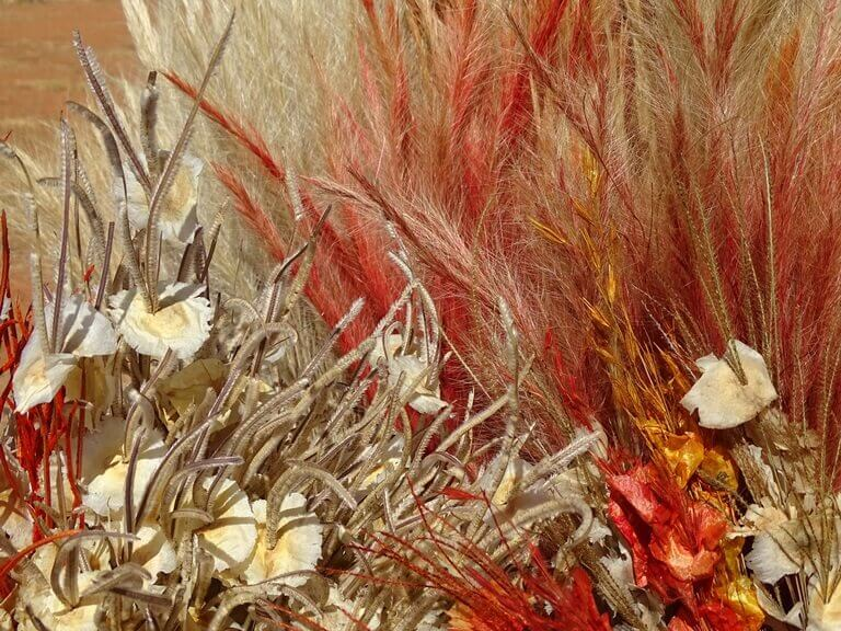 Artesanato de Flores Secas do Cerrado em Brasília