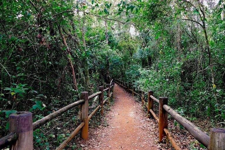 Trilha do Parque Nacional de Brasília